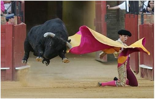touro voador